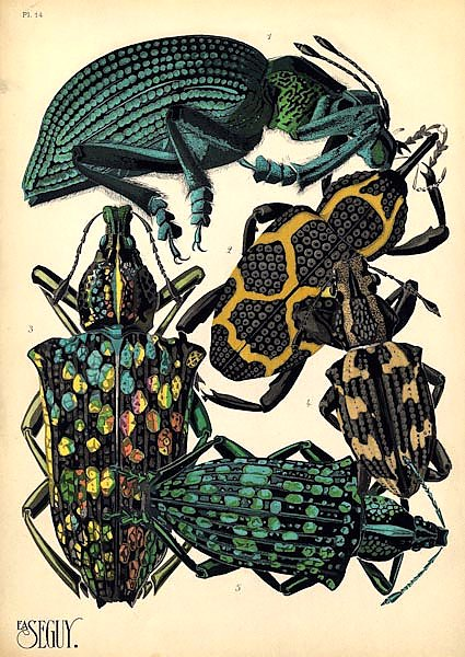 Insects by E. A. Seguy №6