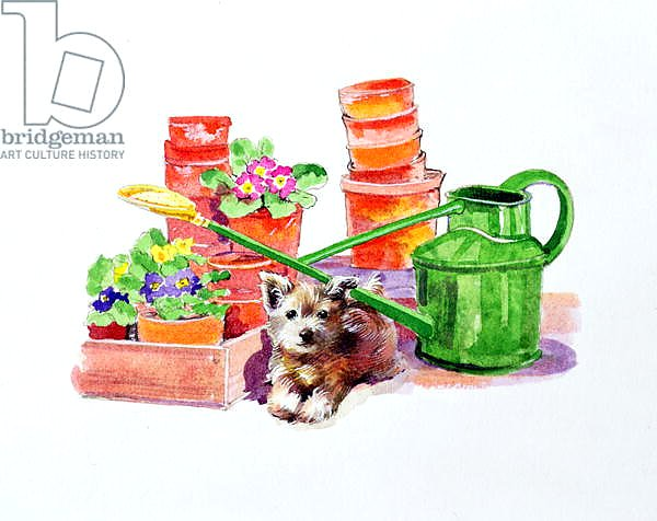 Terrier amongst Terracotta Pots