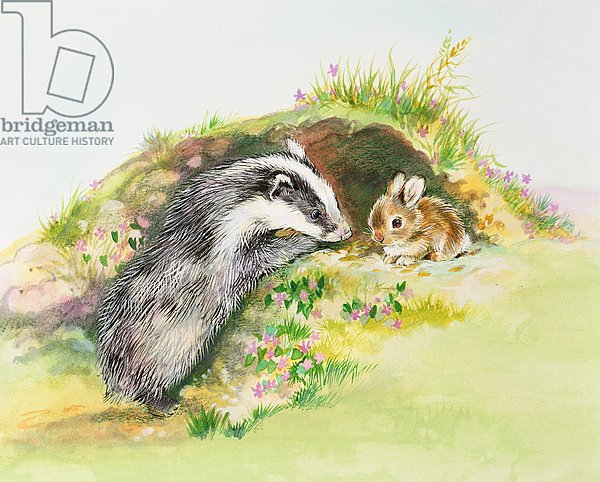 Badger and a Rabbit