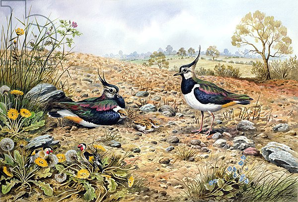 Lapwing Family with Goldfinches