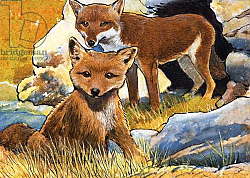 Постер Бэкхаус Д. (совр) Wind From the North: Facts about Foxes