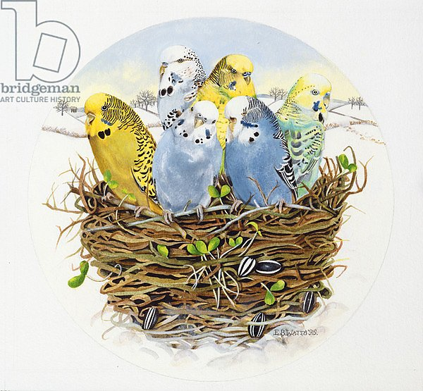Budgerigars in a Nest, 1995