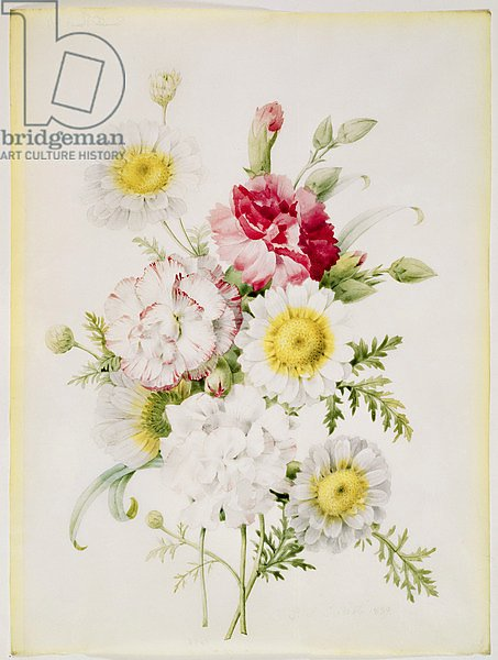 Bunch of Mixed Carnations and White Marigolds, 1839
