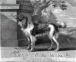 Постер Саттон Николс The New Chien Savant, or Learned Dog, print made by F-Morellon la Cave, 1752