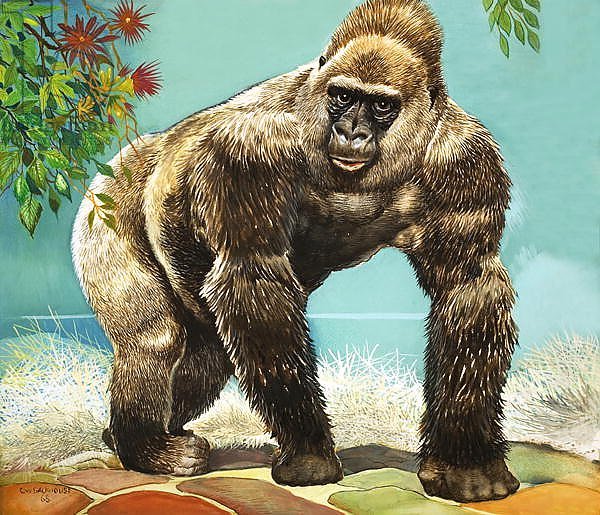 Guy the Gorilla, illustration from 'Who's in the Zoo'