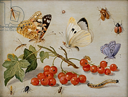 Постер Кессель Ян A still life with sprig of Redcurrants, butterflies, beetles, caterpillar and insects
