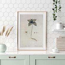 Копии гравюр с ботаникой для кухни или столовой