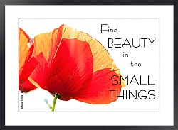 Постер Find beauty in the small things