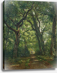Постер Дьютилюкс Анри Path in the Forest, 1864