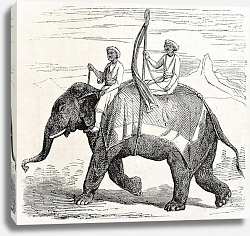 Постер Elephant in Oude, antique Indian northern kingdom, By unidentified author, published on L'Illustrati