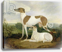 Постер Хэнкок Чарльз Two Greyhounds in a Landscape