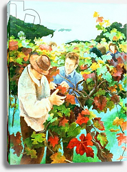 Постер Анжелини Кристиана (совр) Grape Pickers, 1996