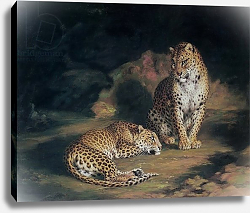 Постер Хаггинс Уильям A Pair of Leopards, 1845