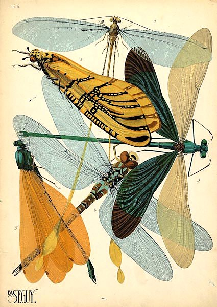 Insects by E. A. Seguy №20