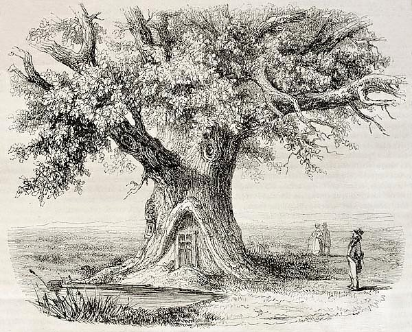 Oak of Montravail, France. Created by Mely, published on Magasin Pittoresque, Paris, 1850