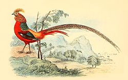 Постер The Golden Pheasants