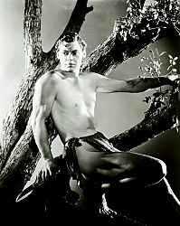 Постер Weissmuller, Johnny (Tarzan The Ape Man)