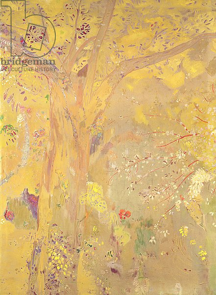 Yellow Tree, 1900-01