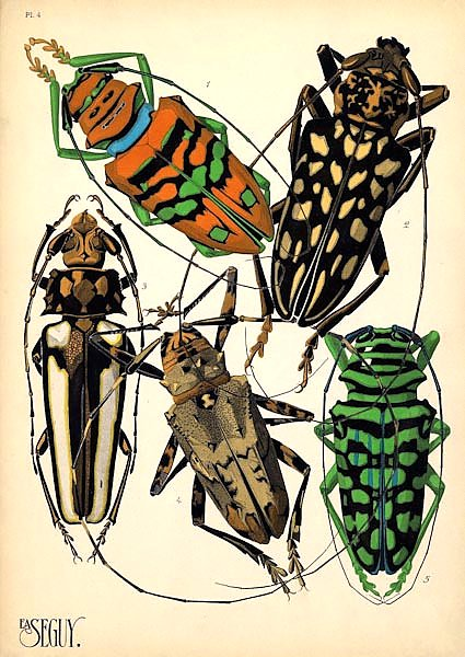 Insects by E. A. Seguy №15