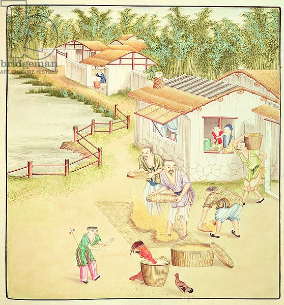 Chinese Peasants Sifting Rice
